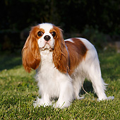 DOG 09 CB0029 01