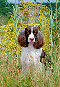 DOG 09 CE0033 01