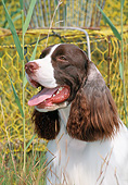 DOG 09 CE0035 01