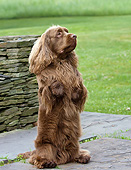 DOG 09 DS0003 01
