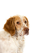 DOG 09 GL0003 01
