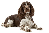 DOG 09 JE0009 01