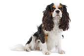 DOG 09 JE0010 01