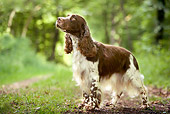 DOG 09 JE0012 01