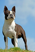 DOG 09 JE0015 01