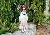 DOG 09 JN0009 01