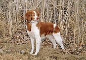 DOG 09 JN0011 01