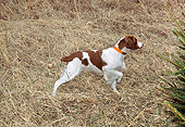 DOG 09 JN0012 01
