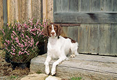 DOG 09 JN0013 01