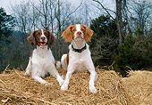 DOG 09 JN0015 01