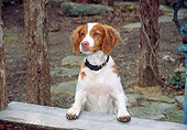 DOG 09 JN0016 01