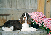 DOG 09 JN0018 01