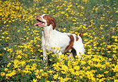 DOG 09 JN0020 01