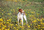 DOG 09 JN0021 01