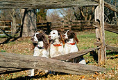 DOG 09 JN0022 01