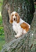 DOG 09 KH0014 01