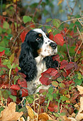 DOG 09 KH0017 01