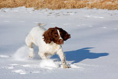 DOG 09 LS0016 01