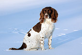DOG 09 LS0017 01