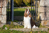 DOG 09 LS0026 01