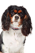 DOG 09 NR0048 01