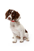 DOG 09 NR0061 01