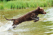 DOG 09 NR0065 01