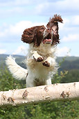 DOG 09 NR0078 01