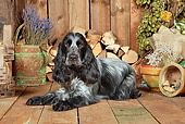 DOG 09 NR0084 01
