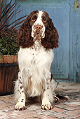 DOG 09 NR0085 01