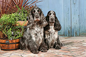 DOG 09 NR0087 01