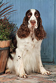 DOG 09 NR0089 01