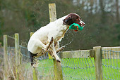 DOG 09 NR0090 01