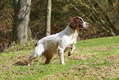 DOG 09 NR0092 01