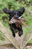 DOG 09 NR0093 01