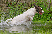 DOG 09 NR0099 01