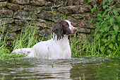 DOG 09 NR0101 01