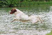 DOG 09 NR0105 01