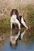 DOG 09 NR0108 01