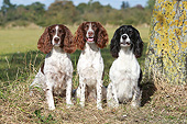 DOG 09 NR0111 01