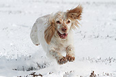 DOG 09 NR0117 01