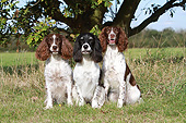 DOG 09 NR0125 01