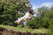 DOG 09 NR0126 01