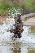 DOG 09 NR0135 01