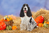 DOG 09 PE0006 01