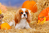 DOG 09 PE0010 01