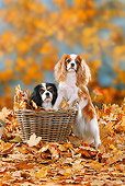 DOG 09 PE0013 01