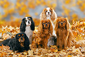DOG 09 PE0015 01