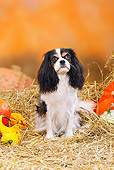 DOG 09 PE0016 01