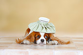 DOG 09 PE0017 01